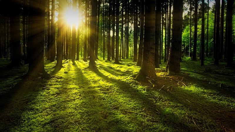 Αποτέλεσμα εικόνας για προστασίας των δασών